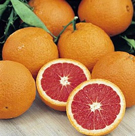 KnitOne,PearlOnion: Citrus and Basil Sangria