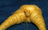 Шегите на природата,конкурс за забавни снимки, забавно, зеленчуци, секс зеленчуци, секс играчки