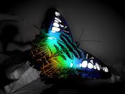 Hd Wallpaper butterfly wallpaper hd nature