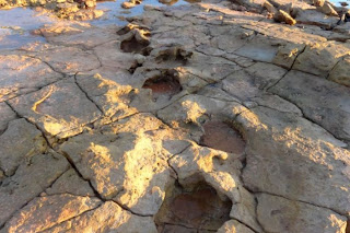 hands off country world s largest dinosaur footprint found in area