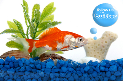 Pet topics anonymous pet care hollywood fl pet store for Your fish store