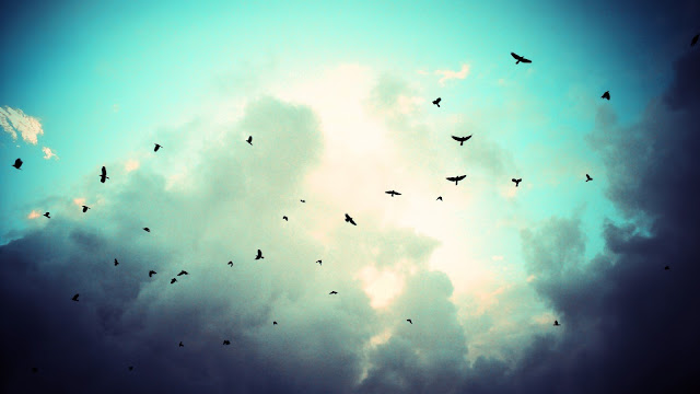 Crows Sky HD Wallpaper