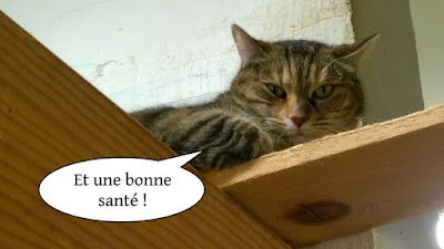Bonne année de l'école du chat libre de Toulouse
