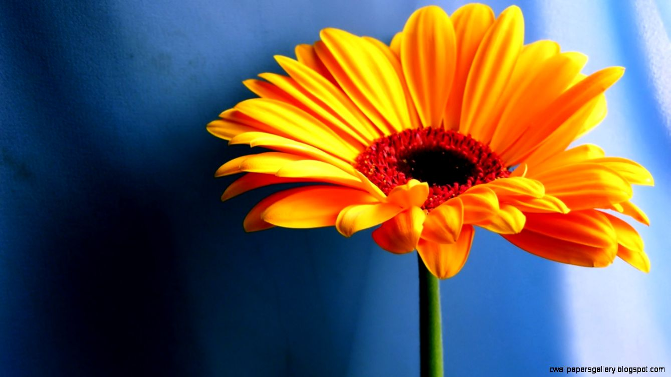 1440x900 Yellow contrast flower desktop PC and Mac wallpaper