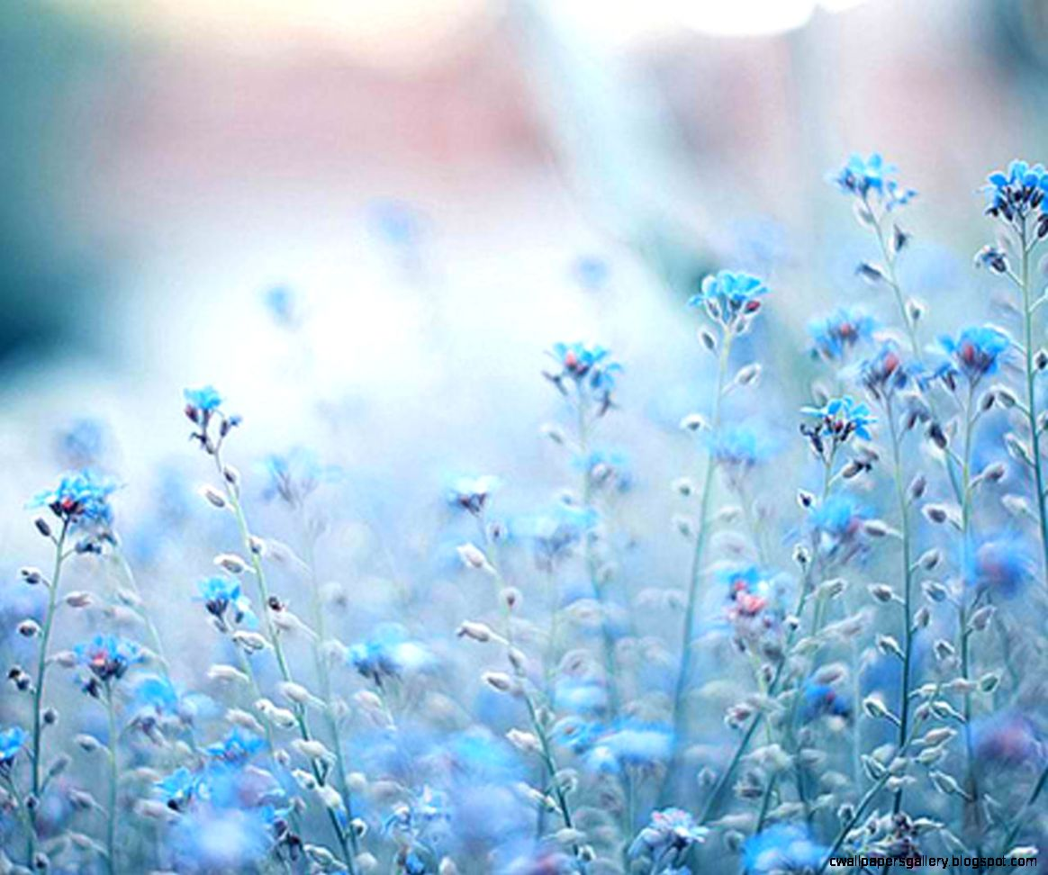 Flower Tumblr wallpaper  1280x1024  42451