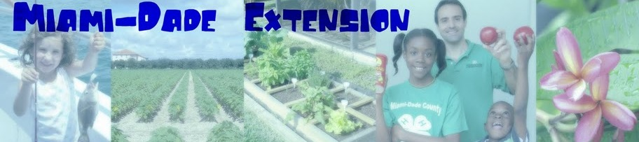 Miami-Dade County Extension