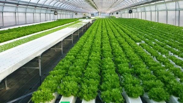 Soil less for Soil less farming