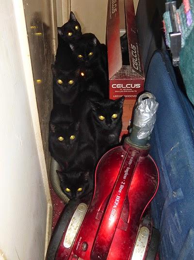 Unneutered black kittens hiding