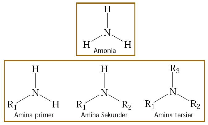 Senyawa Amina, Sifat, Kegunaan, Tata Nama, Pembuatan, Sintesis ...