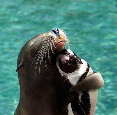 Cute and Funny Animals,Cute and Funny Animals pictures funny humor pics