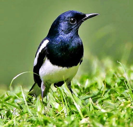 Tips Mengatasi Kutu pada Burung Ocehan