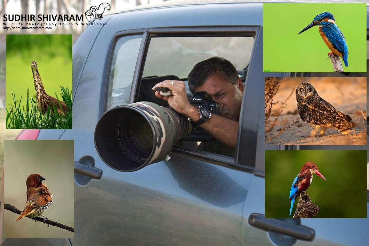 bird photography tips -  photographing birds from a vehicle