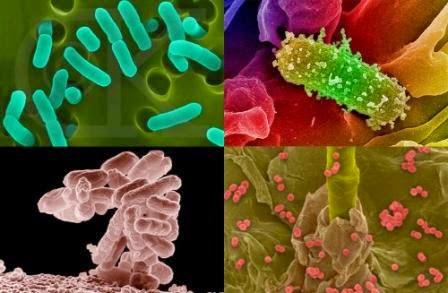 obat bakteri gonore