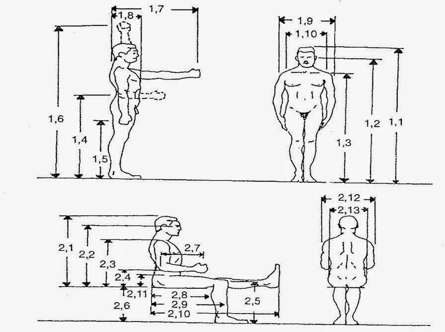 Arkinetika las medidas del cuerpo humano antropometria for Antropometria y ergonomia