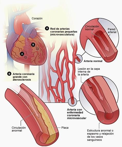 Circulaciones coronaria y renal