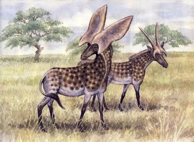 miocene fauna Prolibytherium