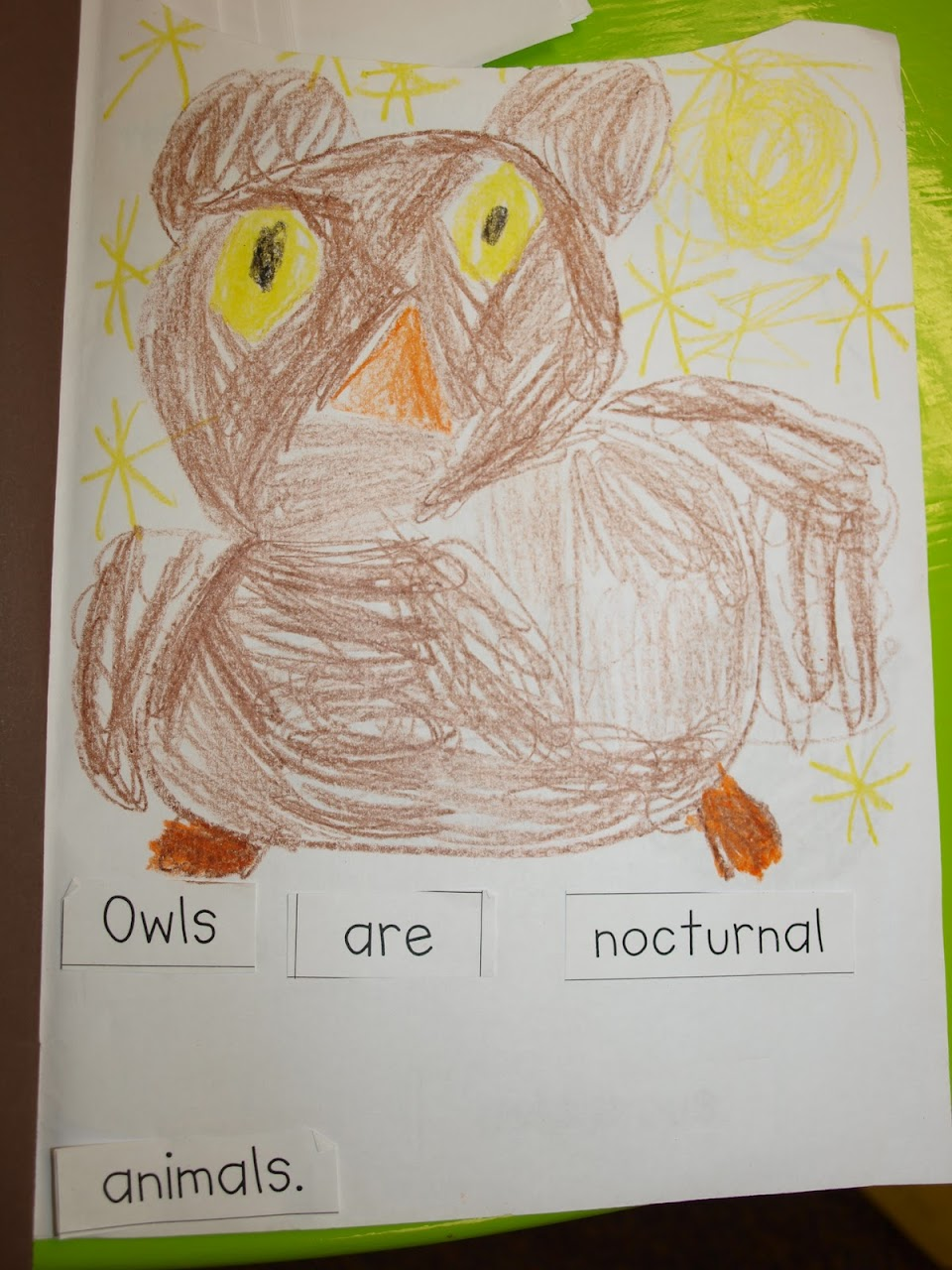 owl book pictures and a cool video mrs jump u0027s class