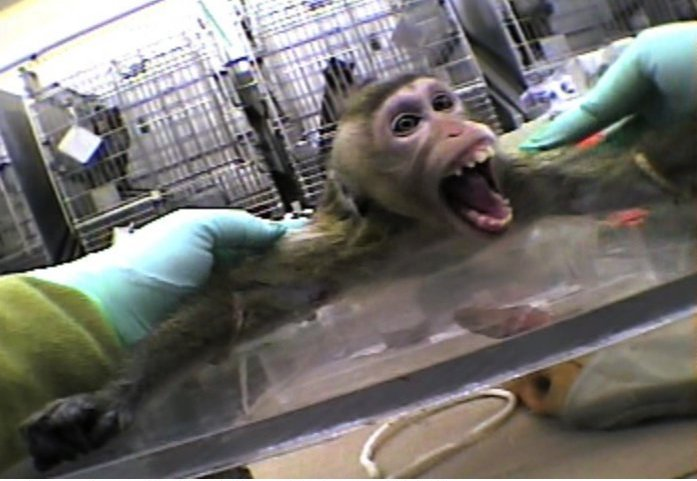 animals in medical research Why animals are used animals are used in research when there is a need to find out what happens in the whole, living body, which is far more complex than the sum of.