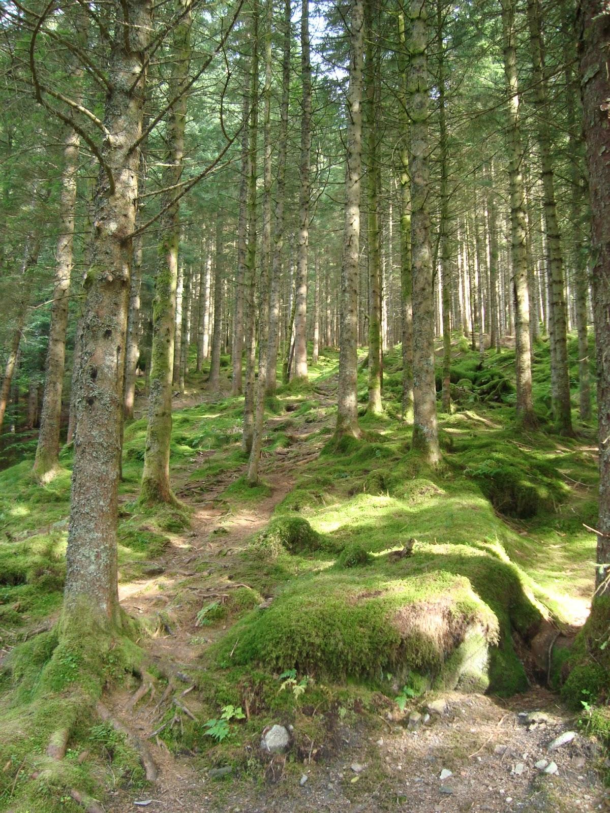 date i bergen Moss