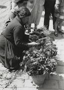 Diada de Sant Jordi a la pl.de Sant Jaume, 1968. AFB. Pérez de Rozas (diada de sant jordi la pl)