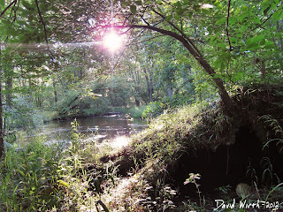 HDR photo of river, forest, setting, sun, shadow