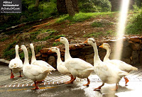 What is a Duck? A duck is a waterbird in the family Anatidae.......