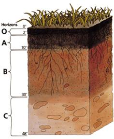 Proses dan Faktor-Faktor Pembentukan Tanah