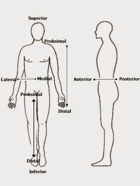 Sains Sukan Maar Anatomi Manusia