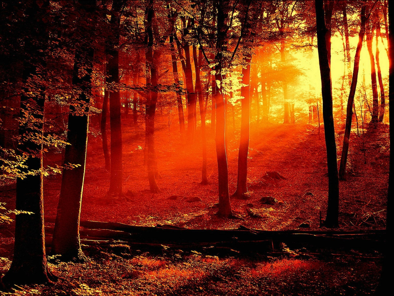 http://3.bp.blogspot.com/-glkpP7AnQWU/UEFviQqIyyI/AAAAAAAAF1c/X4vh7ZZt7fI/s1600/Red+Light+Sunset+in+Forest.jpg