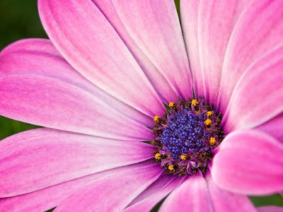 Pink Flowers Picture