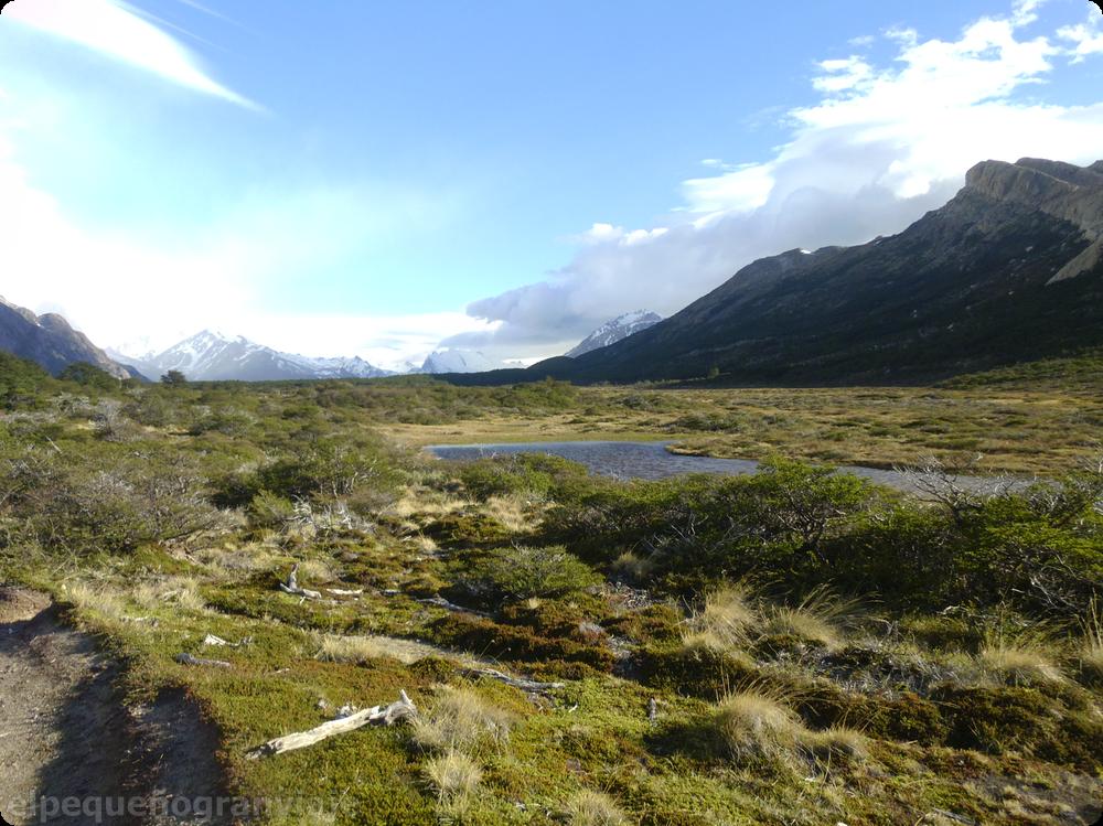 El Chaltén, mallines, patagonia