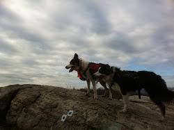 Trek and Moxie
