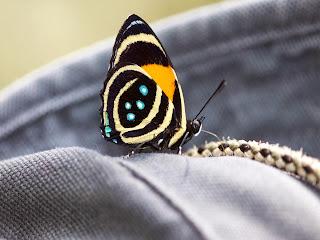 linda mariposa