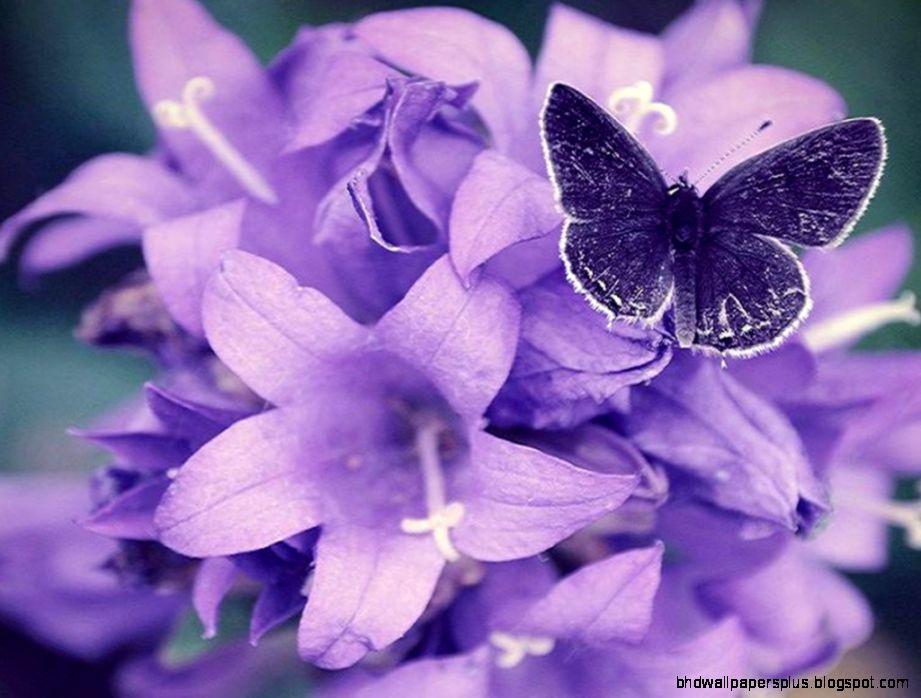 Purple Flowers  1024x768px  636051