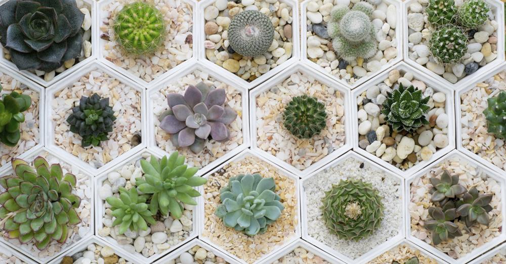 de estas plantas, perfectas para cualquier tipo de jardín e indicadas