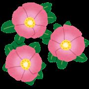 ハマナスのイラスト(花)