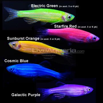 ge ics101 gmonth glofish