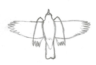 Figure 28: Outline of American Robin flapping and partially closed glide.