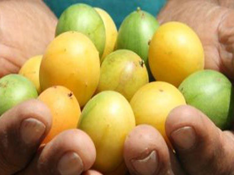 Fruit Names Beginning With U