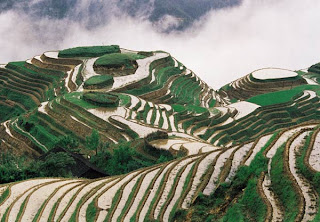 Rice terraces, Guangxi Province