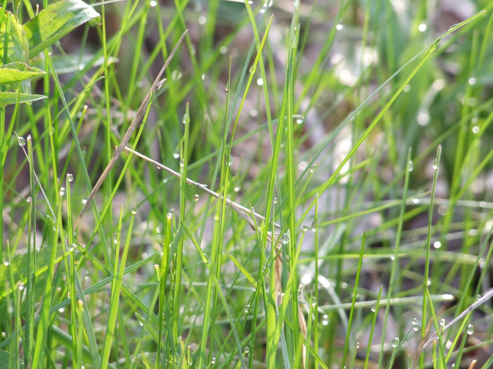 Beechwood wetland blog for The beechwood