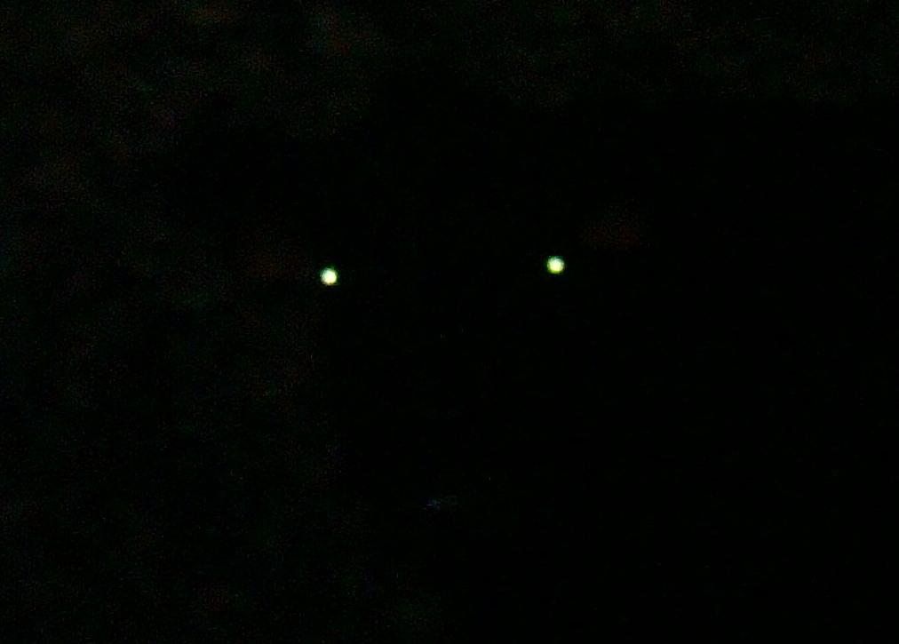 CO-Runner: Glowing Eyes