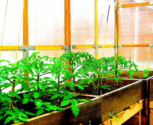 Why You Need to Know the Benefits of Greenhouse Gardening