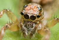 Spiders HD 21