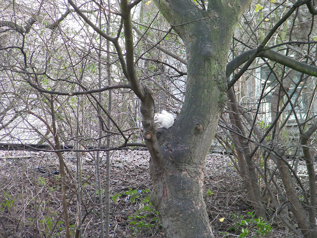 albino squirrel in tree, victoria park portsmouth