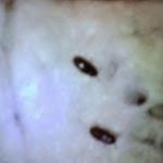 gambar semut - gambar semut jepang