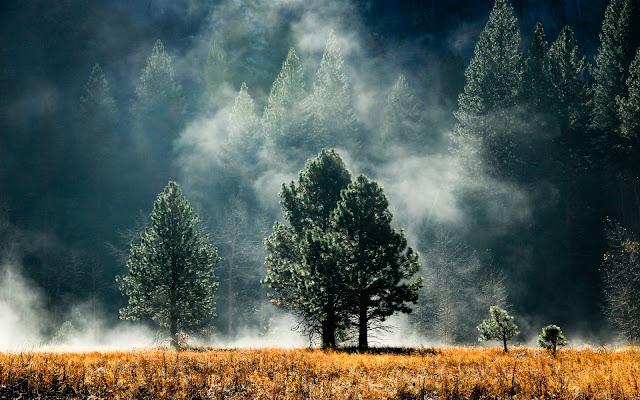 Paisajes Naturales Bosques de Pinos