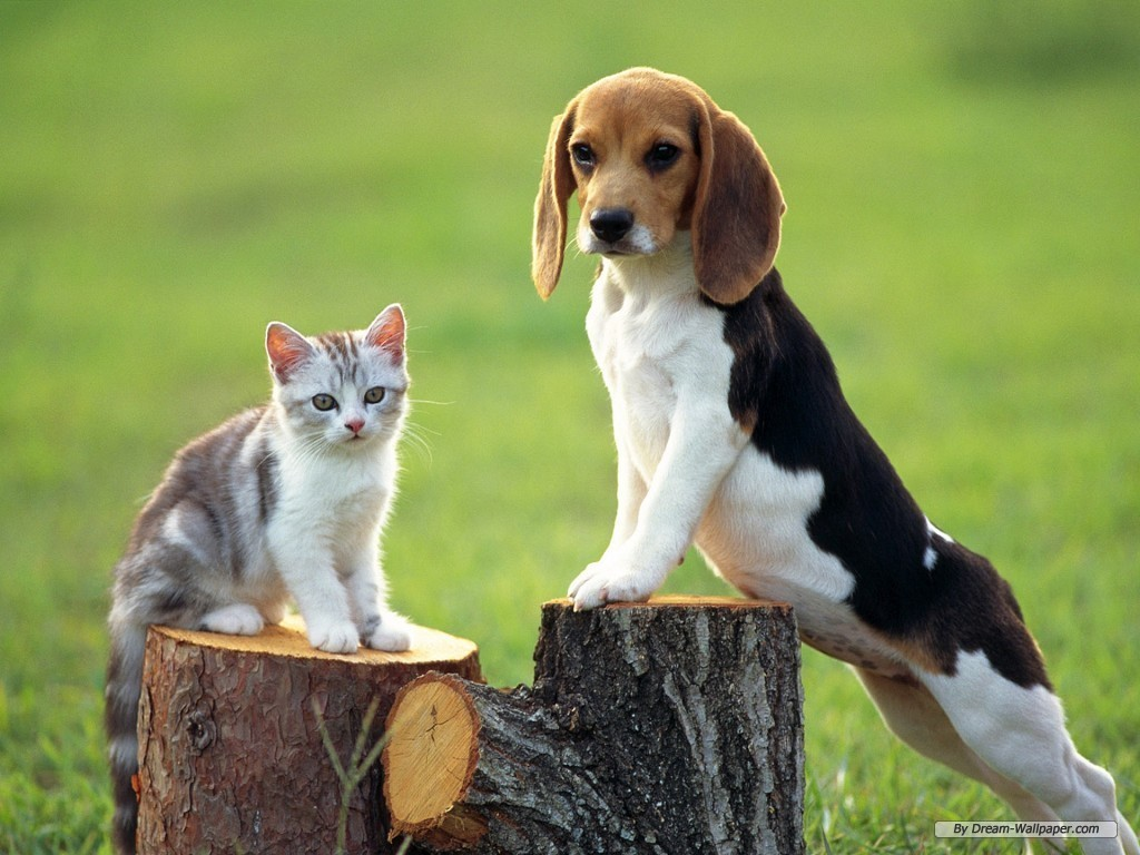 Small beagle puppies