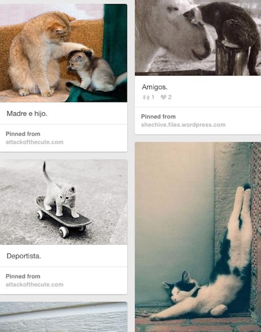 http://www.pinterest.com/carmenpalmieri/gatos/