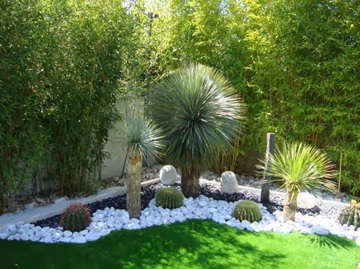 decorar jardin pequeo cactus